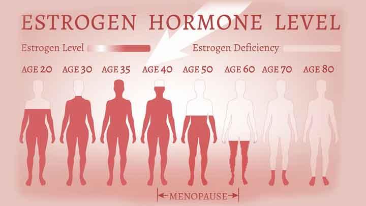 Estrogen là gì? chức năng sinh lý và những bệnh lý liên quan