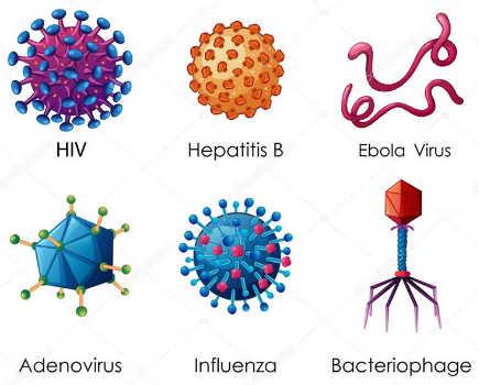 Virus là gì? cấu trúc, phân loại, sự nhân bản, khả năng gây bệnh